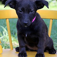 Adopt A Pet :: Smokey - Waldorf, MD