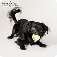 Adopt A Pet :: Rascal - Los Angeles, CA