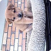 Adopt A Pet :: Moe - North Hollywood, CA