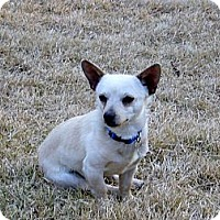 Adopt A Pet :: Elvis - Alexandria, VA