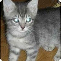 Adopt A Pet :: Daisy & Diva - Fort Lauderdale, FL