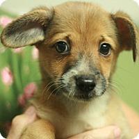 Adopt A Pet :: Tessie - Canoga Park, CA