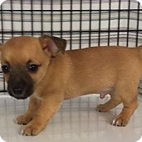 Adopt A Pet :: Dahli#4M - Orlando, FL