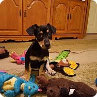 Adopt A Pet :: Radar - Middlesex, NJ