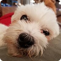 Adopt A Pet :: Rodney - Covina, CA