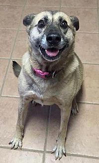Shepherd (Unknown Type) Mix Dog for adoption in Holly Springs, North Carolina - Aura
