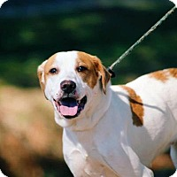 Adopt A Pet :: Little Millie - Middletown, NY