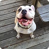 Adopt A Pet :: Jiggy - Davison, MI