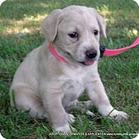 Adopt A Pet :: GINGER - PRINCETON, KY