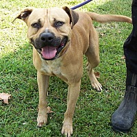 Adopt A Pet :: Percy - Metamora, IN
