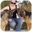 Photo 4 - German Shepherd Dog Dog for adoption in Los Angeles, California - Serena von Verdenberg
