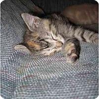 Adopt A Pet :: Enya - Little Rock, AR