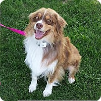 Adopt A Pet :: Rusty - Blooming Prairie, MN