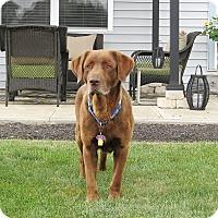 Adopt A Pet :: Ben - Lewisville, IN