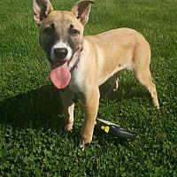 Adopt A Pet :: Mercedes - Oakland, MI
