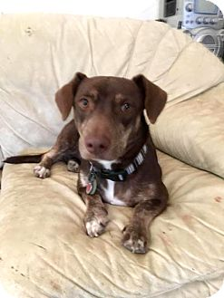 Basset Hound/Terrier (Unknown Type, Small) Mix Dog for adoption in Sterling Heights, Michigan - Princess