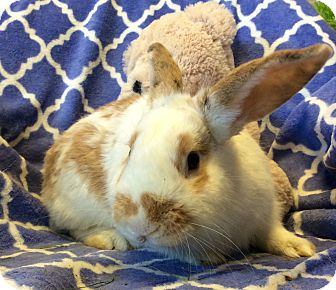 Other/Unknown Mix for adoption in Idaho Falls, Idaho - Linus