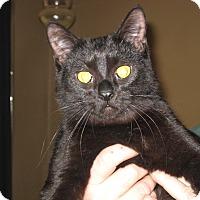 Adopt A Pet :: Pearl - Eastpointe, MI