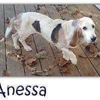 Adopt A Pet :: Anessa - Marietta, GA
