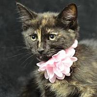Adopt A Pet :: Sally Ride170999 - Atlanta, GA