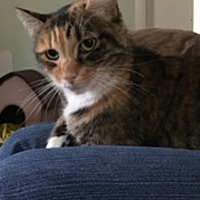 Adopt A Pet :: Pandora - Stroudsburg, PA