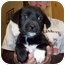 Photo 1 - Cattle Dog/Dalmatian Mix Puppy for adoption in Kingston, New York - Carter