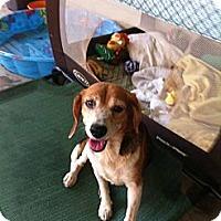 Adopt A Pet :: Daisy - Donaldsonville, LA