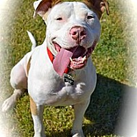 Adopt A Pet :: Happy boy- Courtesy post - Phoenix, AZ