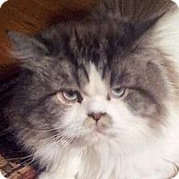Adopt A Pet :: Calvin - Columbus, OH
