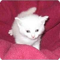 Adopt A Pet :: Cricket - Richmond, VA