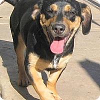 Adopt A Pet :: Baby Trusty - Oakley, CA