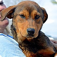 Adopt A Pet :: Annie - Somers, CT