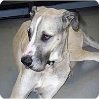 Adopt A Pet :: Paris - Martinsburg, WV