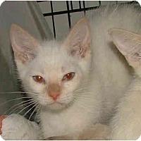 Adopt A Pet :: Winterberry - Dallas, TX
