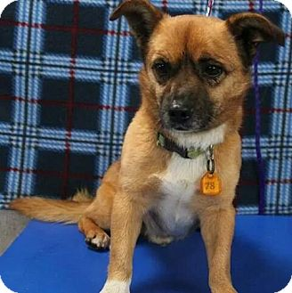 Terrier (Unknown Type, Small) Mix Dog for adoption in Calgary, Alberta - Woody