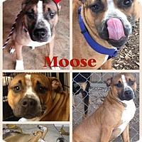 Adopt A Pet :: Moose - Donaldsonville, LA