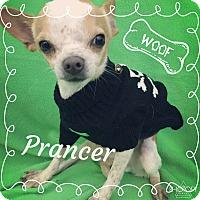 Adopt A Pet :: Prancer - Lake Elsinore, CA