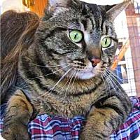 Adopt A Pet :: Eleanor - Davis, CA