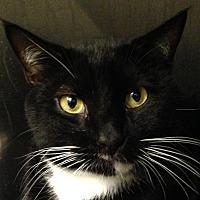 Adopt A Pet :: Hurricane - Marlton, NJ