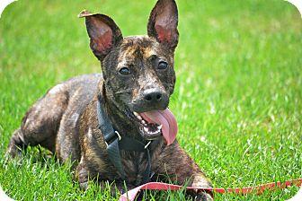 Terrier (Unknown Type, Medium) Mix Dog for adoption in Hazlehurst, Georgia - Tilly