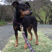 Adopt A Pet :: Roxy Autumn - Clayton, CA