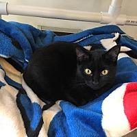 Adopt A Pet :: Melanie - Bourbonnais, IL