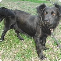 Adopt A Pet :: Bojangles - Chapel Hill, NC
