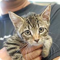 Adopt A Pet :: Ruby - Brooklyn, NY