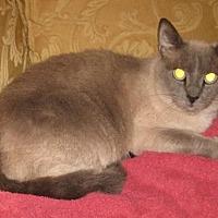 Adopt A Pet :: Bella - Mobile, AL