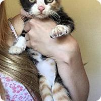 Adopt A Pet :: Kaya - Melbourne, FL