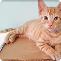 Adopt A Pet :: Persephone17 - Youngsville, NC
