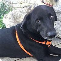 Adopt A Pet :: Schooner - Sudbury, MA