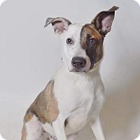 Adopt A Pet :: Kai - Ogden, UT