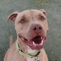Adopt A Pet :: SIMBA - Las Vegas, NV